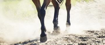 Cavalos Haras Albar